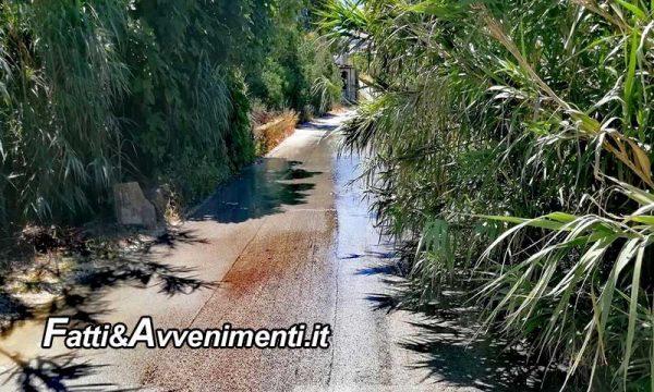 """Sciacca. Commissione sanità: """"Ripulire strada che conduce c.da Foggia invasa da sterpaglie e canneti"""""""