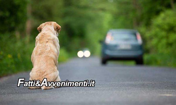 Legge & Diritto. Abbandonare gli animali non è etico ed è punito con ammende. Ecco cosa dice la legge