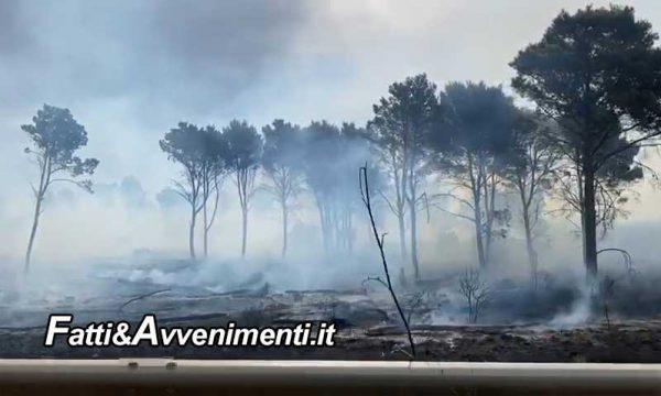 """Montevago (AG). Incendio  bosco del Magaggiaro, Il sindaco La Rocca Ruvolo: """"taglia a chi segnala i piromani"""""""