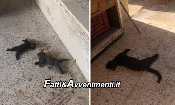 Sant'Agata Militello. Strage di gatti: oltre 10 avvelenati con una sostanza blu, due agonizzanti si cerca di salvarli