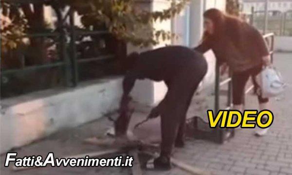 Livorno. Orrore: immigrato 21enne uccide un gatto e lo cucina in strada per mangiarlo: passanti inorriditi – VIDEO