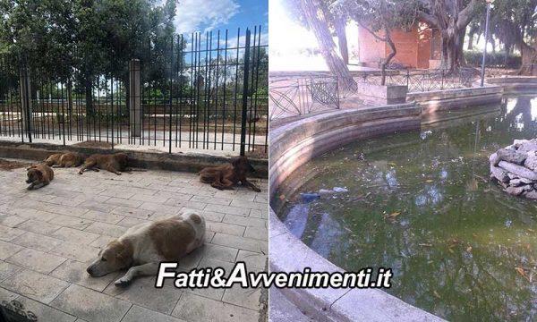 """Sciacca. Cani in via Figuli e degrado villa comunale. Opposizione a giunta: """"ora direte che sono foto fake"""""""