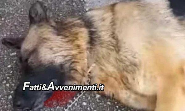 Gravina (CT). Litiga con il compagno e per ripicca gli getta il cane dal 4° piano che muore: denunciata
