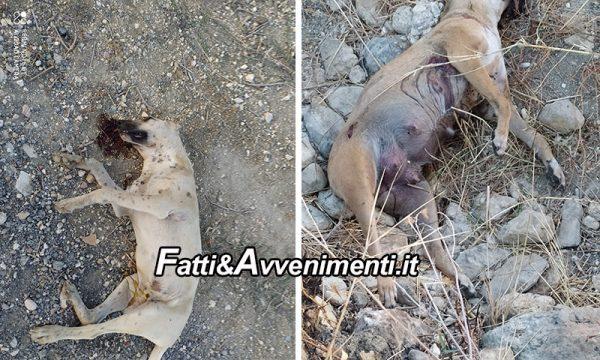 Sciacca. 3 cani avvelenati, ma uno è stato caricato sul mezzo raccolta rifiuti e l'Asl non ne sa nulla