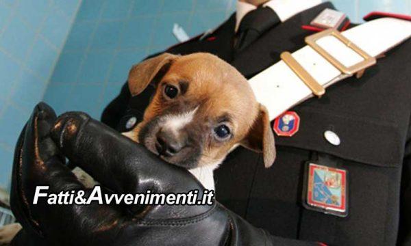 """Augusta (SR). """"Animalista"""" ruba cucciolo ad anziano e fugge: fermata dai carabinieri dice """"non lo curava"""". Denunciata"""