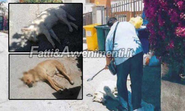 Castelvetrano (TP). Avvelenati due dolcissimi cani di quartiere: sconforto tra i residenti