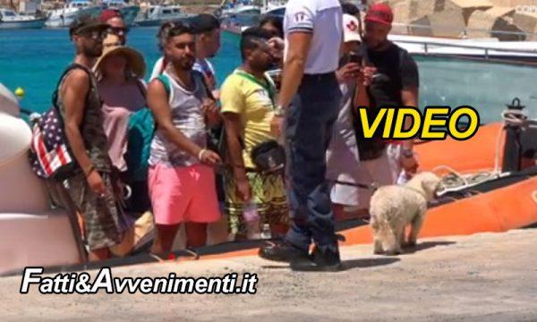 """Lampedusa. Cappello di paglia, occhiali e barboncino, turisti? No poveri migranti """"in fuga dalla guerra"""""""
