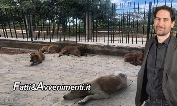 Sciacca. Il comune rimette in libertà 15 cani: protestano le associazioni e l'On. Mangiacavallo