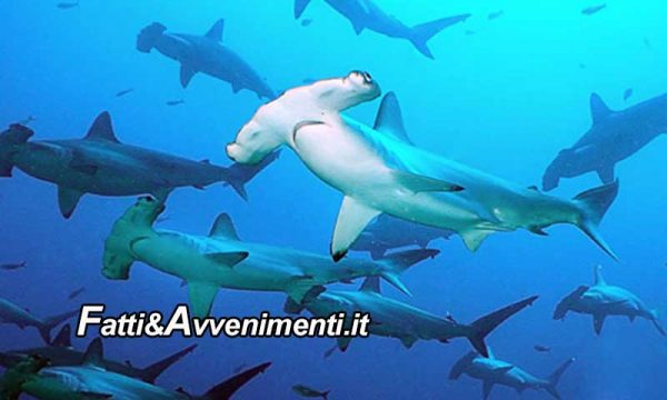 """Trapani. Sub circondato da un branco di squali mentre fa pesca subacquea: """"esperienza traumatica"""""""