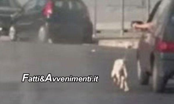 Campofelice di Roccella (PA). Lega un cane all'auto con una corda e lo trascina: è ferito, ma si salverà