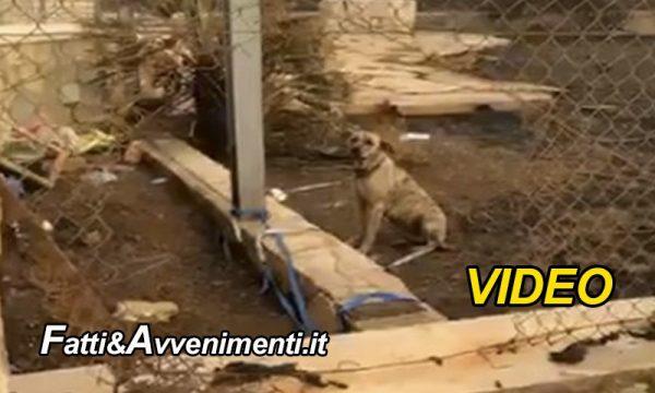 Custonaci (TP). Va in Germania e abbandona il cane senza cibo e acqua legato alla catena: denunciata una donna