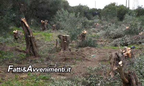 Burgio (AG). Intimidazione a bracciante agricolo: tagliati 200 alberi d'ulivo. Indagano i carabinieri