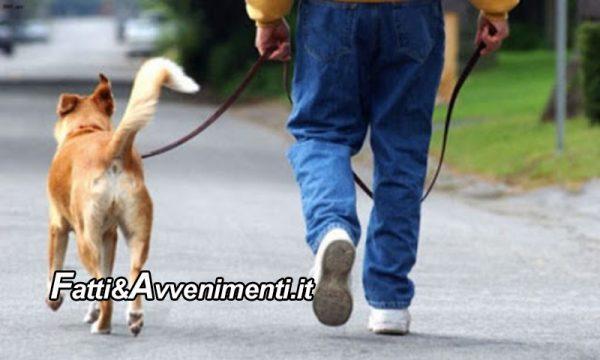 Legge & Diritto. A spasso con il cane: la museruola è  obbligatoria o facoltativa?