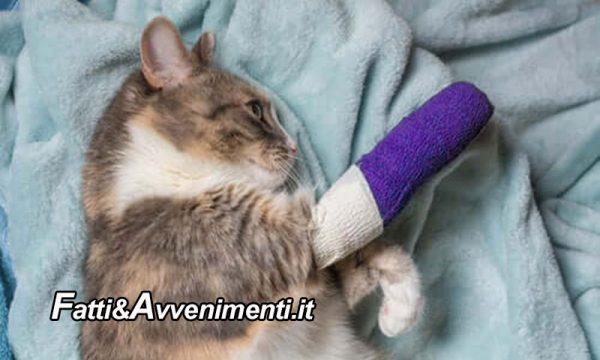 Piazza Armerina (EN). Prende a calci un gatto e gli rompe una zampa: Tribunale lo condanna a 10 mila euro di multa