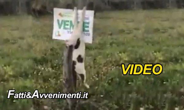 Menfi (AG). Balordi uccidono un gatto e lo attaccano come trofeo su una tabella – VIDEO