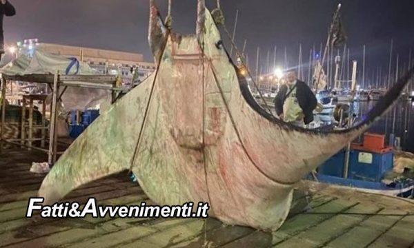 Palermo. Avvistata manta di 450 chili nelle acque del porto: i vigili del fuoco la prelevano con una gru