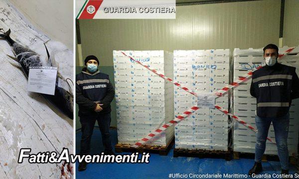 Sciacca. Guardia Costiera sequestra 55 chili di tonno rosso ed eleva verbale per € 2.666,00