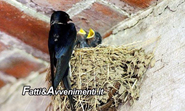 Legge & Diritto. Distruggere un nido di rondine è reato