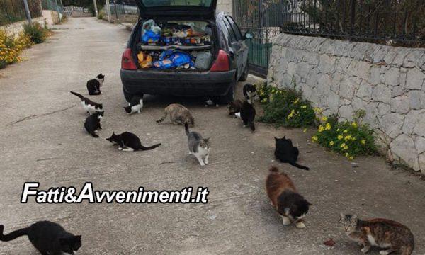 """Vittoria (Rg). Rubano l'auto """"all'angelo dei gatti randagi"""": lanciato appello per ritrovarla"""