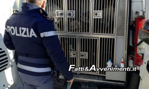 """Agrigento, SS115. Trasporta 12 cani senza documenti: multa di 2500 euro, """"andava a Malta"""""""