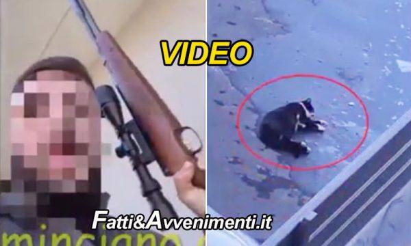 Catania. Spara e uccide il gatto con il fucile poi posta il video sui social: arrestato dalla polizia con un bliz