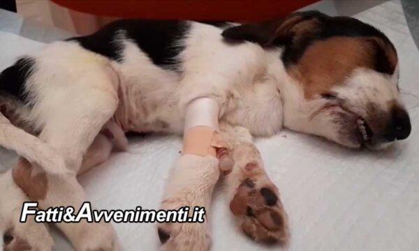Sciacca. Cucciolo bruciato con sigarette e gettato nella spazzatura: morto nonostante le cure degli animalisti
