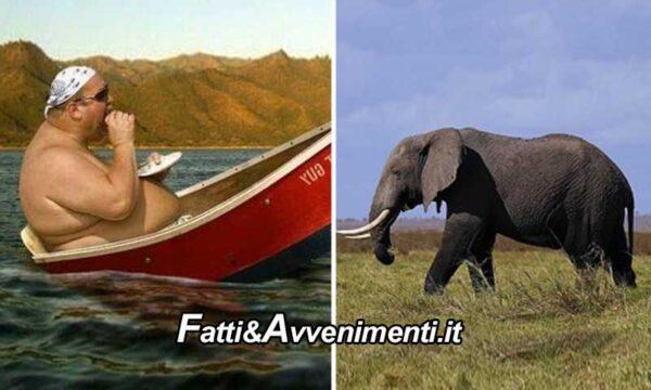 Salute & Benessere. È più grasso l'uomo o l'elefante? La scienza non ha dubbi