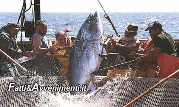 Pesca. Ugl su quota tonno rosso: la Sicilia ancora una volta penalizzata dall'UE