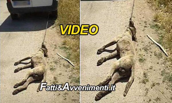 Mazara del Vallo. Rumeno trascina un cane fino alla morte poi gli spara e posta il video su FB: denunciato