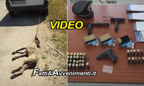 Mazara del Vallo. Arrestato il rumeno che ha ucciso un cane trascinandolo con furgone e sparandogli