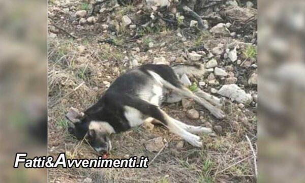 Sciacca. Un cane è stato ucciso barbaramente con colpi d'arma da fuoco: è caccia agli autori