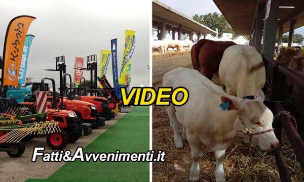 """Ragusa. Da oggi 24 al 26 settembre """"46^ edizione della Fiera Agroalimentare Mediterranea"""": le interviste"""